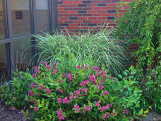 Erie Independence House Laura Wallerstein Apartments landscaping adds beauty and interest to the everyday life of our residents.